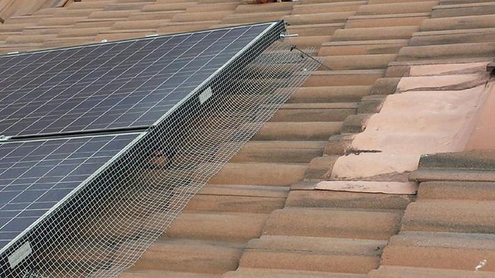 Solar panels pigeon free