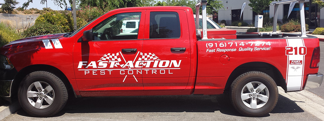 Fast Action Pest Control