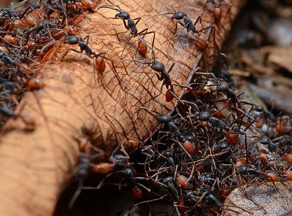 Ants in Elk Grove