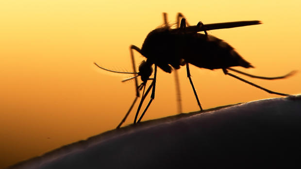 West Nile Virus Rising In Sacramento & Linked To Shorter Life Span