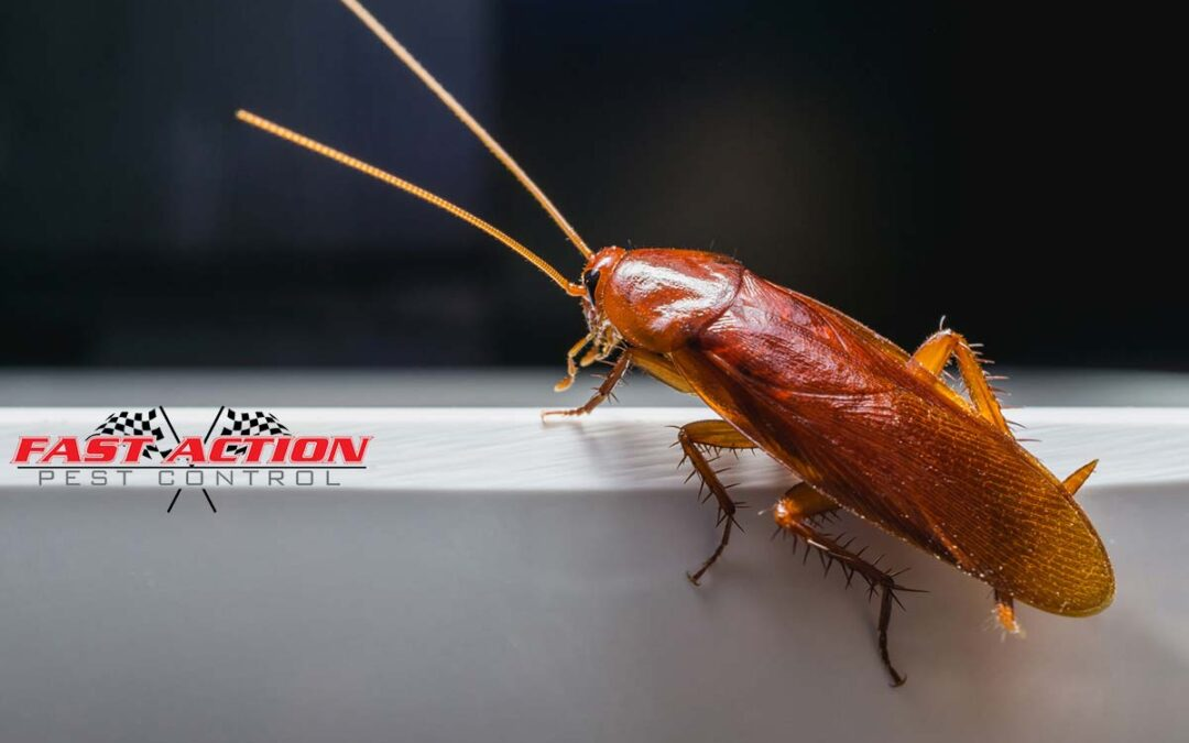 6 Warning Signs of a Cockroach Infestation