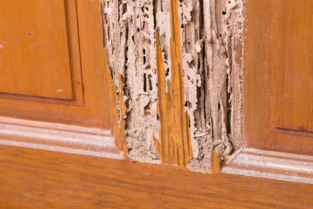 Termite Damage: This Is What They Can Do to Your House