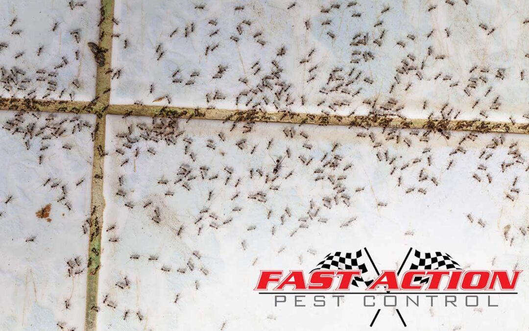 How to Spot Common House Pests
