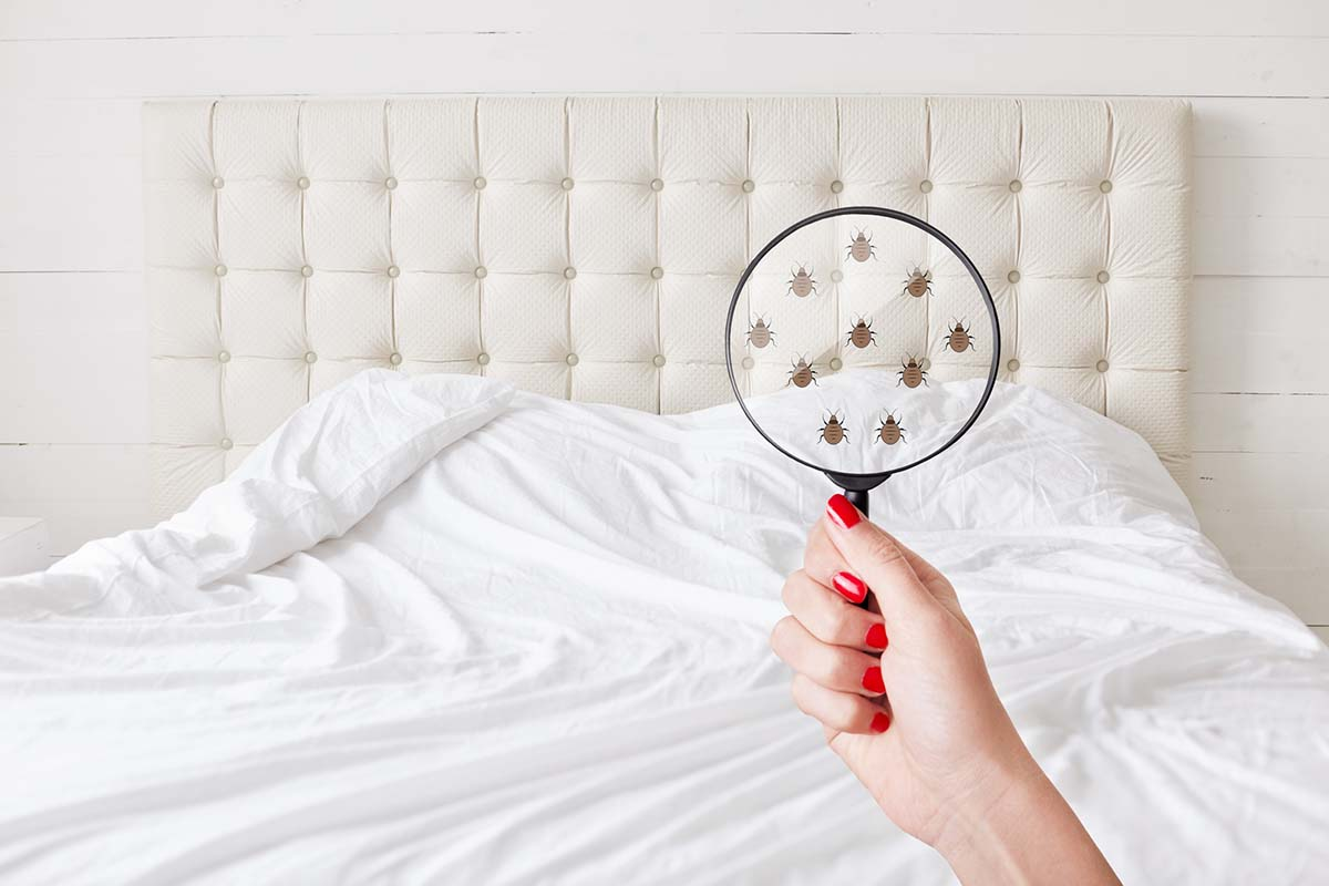 Preventing Infestation: How to Spot Bed Bugs Early