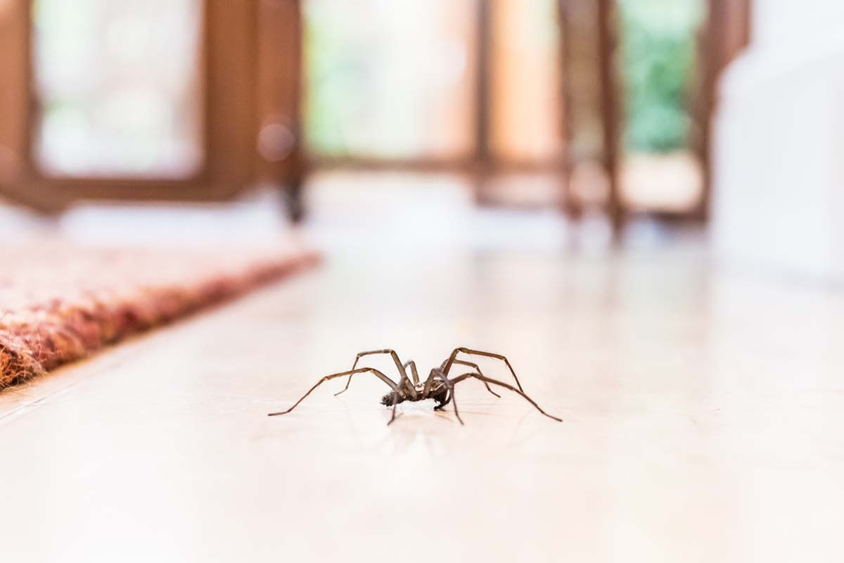 The Different Types of Spiders Found in Homes